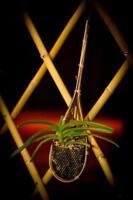 Bambushängekörbchen für Orchideen und andere Hängepflanzen... Top Exotisch