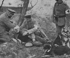 Wounded Soldier German Medics Red Cross Dog World War 1 6x5 Inch Reprint Photo