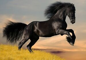 Fresian horse Photo Poster Print ONLY Wall Art A4