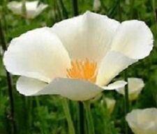 California Poppy Flower Seeds - White - Bulk - 6,000 Seeds