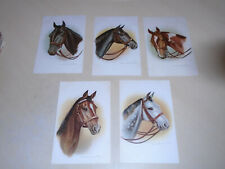 More details for 5 early dorothy travers pope horse head postcards - hunters & racers - 995