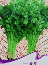 1 Pack 60 Celery Seeds Petroselinum Crispum Chinese Celery Garden Herb D036