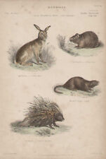 Hare Rabbit Porcupine by Landseer 1846 Antiq Art Print
