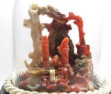 presepe fatto a mano di corallo rosso naturale campana in vetro base in legno