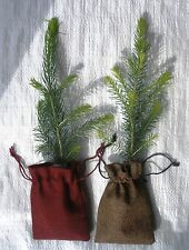 Real Christmas Tree  Plants 25 - 30 cm  in Jute Hessian Drawstring Bags X 2
