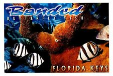 Florida Keys Postcard Banded Butterfly Fish Tropical Mangoes Red Wine Recipe