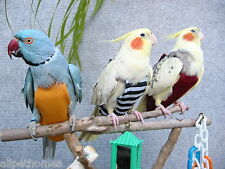 Bird Fashion Nappy/Diaper - Flight Suit For outside cage Toy - for LARGE bird