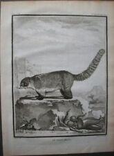Antique (Pre-1900) Brown Animals Art Prints
