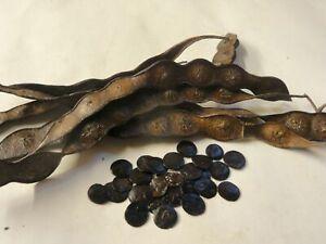 Cebil | Calcium Tree (Anadenanthera peregrina) Seeds | Organic | 20 ct.