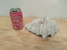 """BIG large Sea urchin shell Conch mollusc gastropods 8.27"""" rare unknown species"""