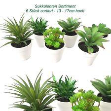 (SPAR-SET) 6 x große Kunstpflanzen Sukkulenten künstlich Pflanzen Topf 1703