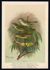 Antique Bird Print-WARBLER-BONELLI-CROWNED-WOOD--Plate II.6-Naumann-1896