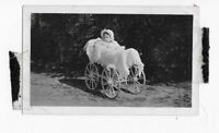 old picture BEAUTIFUL BABY GIRL IN LUXURY PRAM baby buggy ANTIQUE photograph