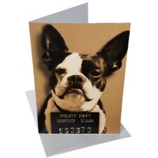 Cute Expressive Boston Terrier Mugshot Blank Greeting Card + Envelope, 5x7 New!