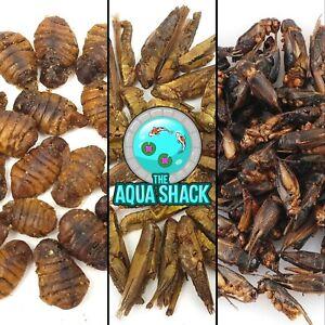 Arowana Food Dried Natural Bugs Floating Silkworm Hoppers Crickets Anti Eye Drop