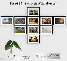 Set of 10 6x4 Wild Horses Pony Photo Picture Prints ONLY Wall Art Equestrian