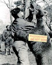 8x10 photo Wojtek (3) 1942-1963 The Polish Soldier Bear in 1944