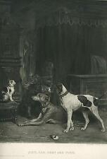 ANTIQUE HUNTING SPORTING GREYHOUND IRISH SETTER POINTER DOGS CAT BEDROOM PRINT
