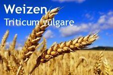 ***Weizenkeimöl, kaltgepresst (Triticum vulgare), 100ml, trockene/reife Haut?