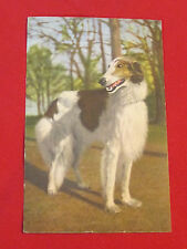 Vintage hand tinted Rppc of Borzoi dog made in Switzerland