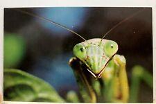 Animal Praying Mantis Portrait Insect Postcard Old Vintage Card View Standard Pc