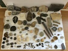 More details for fossil collection for sale