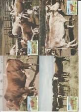4 Maximum kaarten Ciskei 1987 nummer 48-51 - Nkone breed of Cattle / Cows (05)