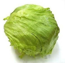 3000 ICEBERG LETTUCE Lactuca Sativa Vegetable Seeds