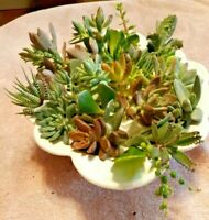 "10 Assorted Succulent Cuttings All Different 3"" - 4""+"