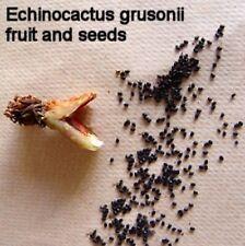 Echinocactus Grusonii Golden Barrel Cactus Seed Pods