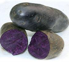 rare purple potato seeds 10 seeds per pkt