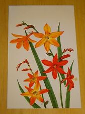 RHS FLOWER POSTCARD ~ THREE ORANGE CROCOSMIA BY GRAHAM STUART THOMAS 1983 ~ NEW