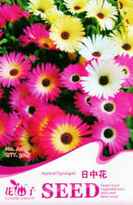 Original Package 30 Mesembryanthemum Seeds Livingstone Daisy Seed Hot A213