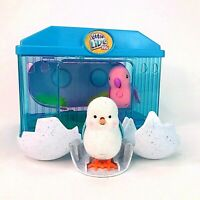 Little Live Pets Electronic Interactive Chick Cage with Tweeting Bird Toy Bundle