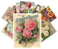Postcards Pack [24 cards] Roses Vintage Seed Pocket Garden Flowers CC1015