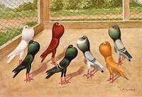Falk Racing Pigeons Glossy Textured Print F