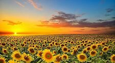Wooden Jigsaw Puzzle Sunflowers In A Field At Sunset 1000-Pieces