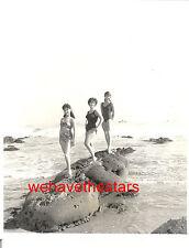 Vintage Pat Stanley Fran Bellini Daria Massey SEXY SWIMSUIT on LA BEACH Pub Port