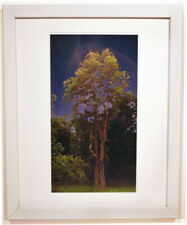 A Tree in Old Bennington ---  20 X 16 Framed Landscape Digital Pigment Print