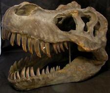 Huge 7.6KG 51.5cm TYRANNOSAURUS REX SKULL T REX DINOSAUR WALL HANGING Jurassic
