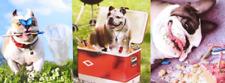 BULLDOG BIRTHDAY CARD Avanti Press BRIGHT & FUNNY DOGS (1 of 2)