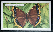 Camberwell Beauty    Butterfly    Original  Vintage Colour Card    VGC
