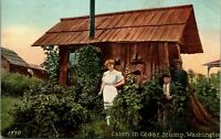Cabin in Cedar Stump Washington 1910 Postcard