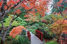 STUNNING JAPANESE GARDEN LANDSCAPE CANVAS #277 QUALITY FRAMED WALL ART A1