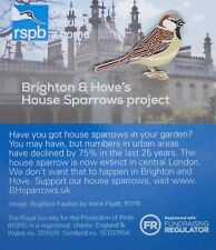 RSPB Pin Badge | House Sparrow (pre-2017) |Brighton House Sparrow project[01343]
