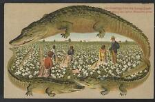 Vintage Unused Alligator Border Postcard Black Workers Picking Cotton S657