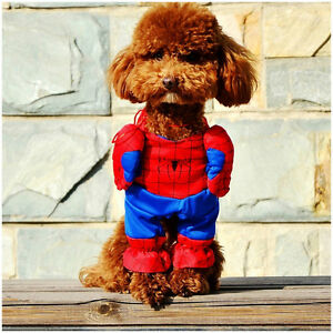 284: DCL-31 SPIDERMAN COSTUME FOR DOGS OR (CATS) FOR SMALL / MEDIUM DOGS  DCL 31