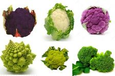 Cabbage seeds Cauliflower 6 pack Different colors from Ukraine