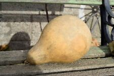 One Small Dried Martin Gourd for crafts