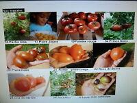 30 graines  semences TOMATES diverses en vrac mélangées seeds Tomato de France